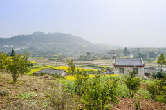 Hillside farmhouses in rape flowers on sunny spring day Stock Photos