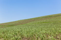 Hillside Farming Landscape Royalty Free Stock Image