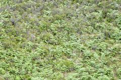 Hillside with fern and moorland. Overview, Scottish Highlands, Scotland, UK royalty free stock photography