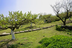 Hillside flagstone path in spring orchard at sunny noon Royalty Free Stock Images
