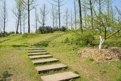 Hillside flagstone path in trees with new leaves at early spring Royalty Free Stock Image