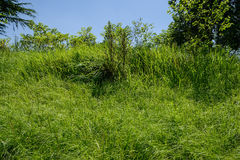 Hillside grass in summer sunlight. Hillside weeds in summer sunlight,Chengdu,China Royalty Free Stock Photo