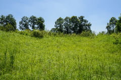 Hillside grass in sunny summer morning. Hillsdie grass in sunny summer morning,Chengdu,China Stock Photo