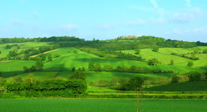 Hillside in green Stock Photography