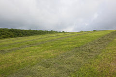 Hillside hay meadow Royalty Free Stock Photography