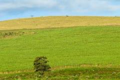 Hillside Landscape Farming Royalty Free Stock Photos