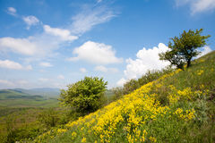Hillside landscape with yellow flowers Stock Photos