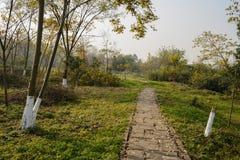Hillside lapident le chemin dans l'herbe et les mauvaises herbes du matin ensoleillé d'hiver photos stock