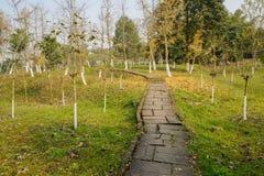 Hillside lapident le chemin dans les arbres défraîchis le jour ensoleillé d'hiver images stock