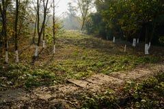 Hillside lapident le chemin dans les mauvaises herbes le jour ensoleillé d'hiver photo libre de droits