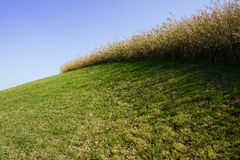 Hillside lawn and foxtail in sunny winter morning Royalty Free Stock Photos