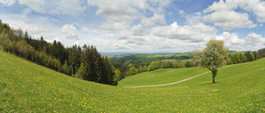 Hillside meadow Royalty Free Stock Images