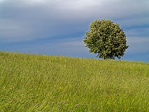 Hillside meadow and tree by darkening sky Royalty Free Stock Images