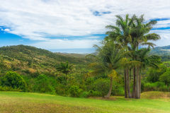 Hillside Palm Trees Royalty Free Stock Image