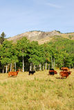 Hillside pasture Royalty Free Stock Images