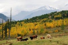 Hillside pasture Stock Images