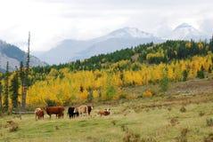 Hillside pasture Royalty Free Stock Photos
