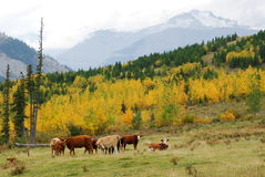 Hillside pasture Royalty Free Stock Photography