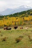 Hillside pasture Stock Image