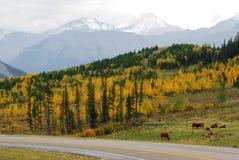 Hillside pasture Royalty Free Stock Photo