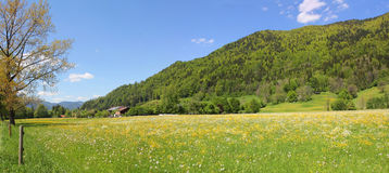 Hillside and pasture, rottach valley, germany Stock Photo