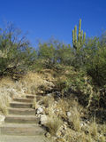 Hillside pathway and steps. A view of a path with steps made out of railroad ties leading to the top of a hill in Sonora desert state park, Arizona Royalty Free Stock Photos