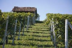 Hillside in Piemonte stock photos