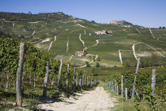 Hillside in Piemonte royalty free stock images