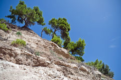 Hillside with Pine Royalty Free Stock Image