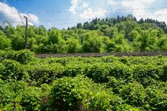 Hillside railway in verdant plants of sunny summer afternoon Stock Image