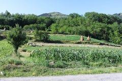 Hillside rural landscape Stock Image