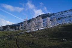 Hillside after snow in Alps Royalty Free Stock Photography