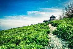 The hillside tea garden. Chinese characteristics of ancient buildings and tea garden Stock Image