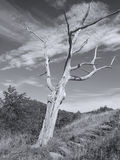 Hillside Tree Royalty Free Stock Photography