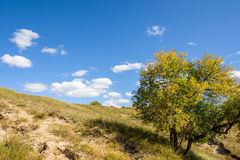 hillside and tree Royalty Free Stock Image