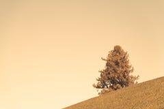 Hillside tree Stock Photo