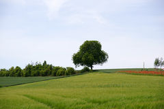 Hillside with tree Royalty Free Stock Photography