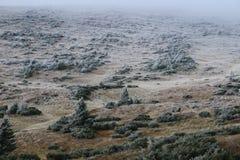 hillside Uma parte da inclinação é coberta com um arbusto com geada imagem de stock royalty free