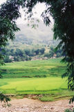 Hillside in Vietnam. Mountain view through bamboo leaves stock images