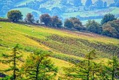 Hillside view. A serene hillside with sheep grazing Stock Photo