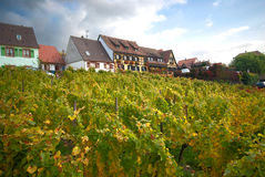 Hillside vineyard Royalty Free Stock Image