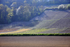 Hillside vineyard Royalty Free Stock Images