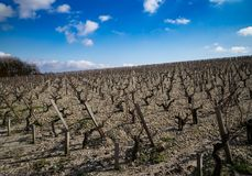 Hillside Vineyard in Bordeaux royalty free stock photos