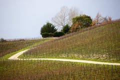 Hillside vineyard, Cromwell stock image