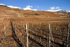 Hillside Vineyards Stock Photo