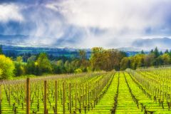 Spring showers in the Vineyards of Yamhill County Stock Images