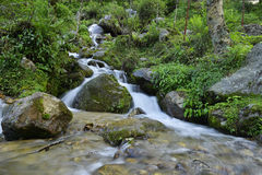 Hillside waterfall in forest Stock Images