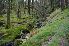 Hillside waterfall Stock Images