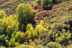 hillside and White Birch in the autumn Stock Photos