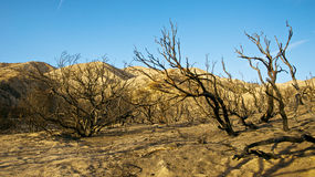 Hillsides of Burned Trees Stock Photos
